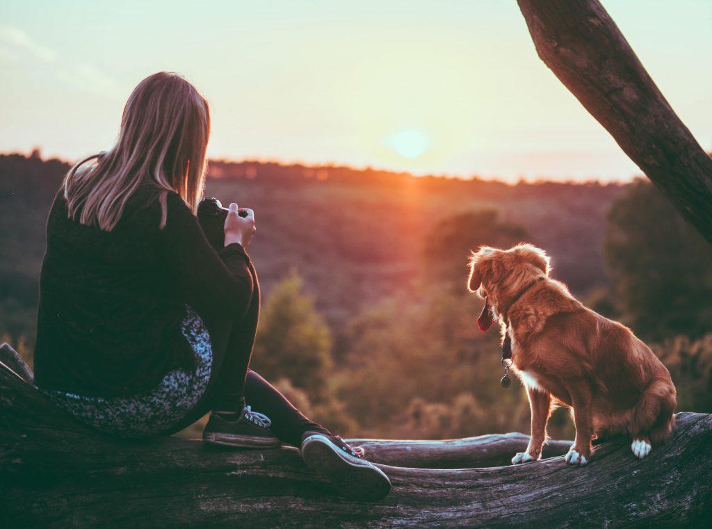 Un chien en promenade au coucher du soleil