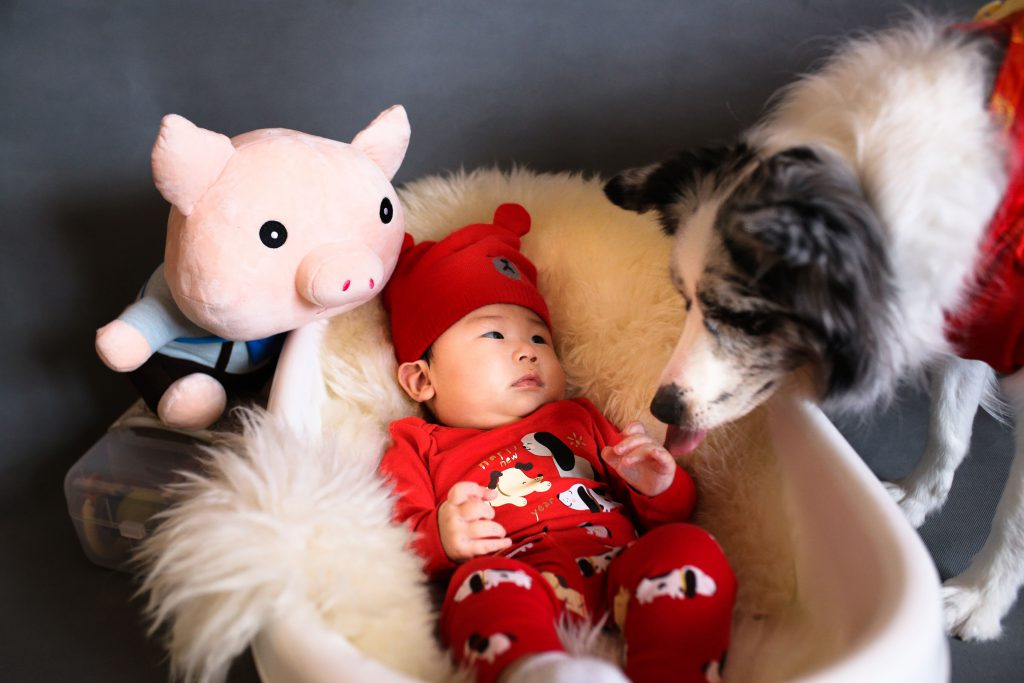 Un chien reagrdant un bébé dans son lit