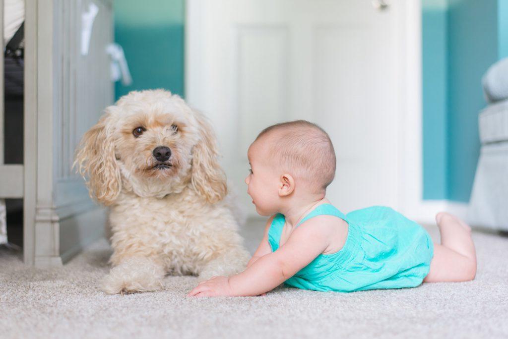 Un chien et un bébé sur le sol
