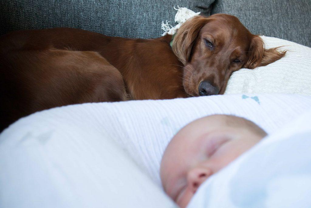 Un cocker dormant avec un bébé