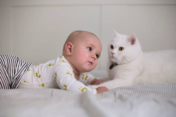 Bébé allongé avec un chat
