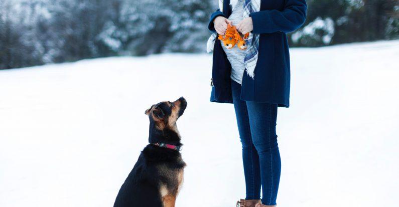 Un chien devant une femme enceinte